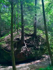 Hiking along the Sheltowee Trace Trail to the Whittleton Arch in Daniel Boone National Forest. Photo by Curt Whitacre.
